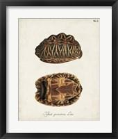 Framed Antique Turtles & Shells I