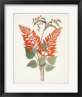Framed Botanical of the Tropics II