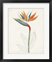 Framed Botanical of the Tropics IV