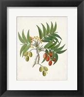 Framed Botanical of the Tropics VI