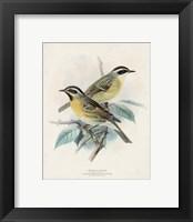 Framed Antique Birds I