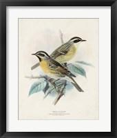 Antique Birds I Framed Print