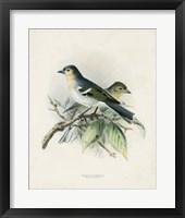 Antique Birds II Framed Print