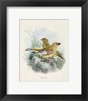 Framed Antique Birds III