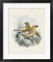Antique Birds III Framed Print
