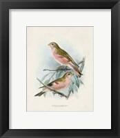 Framed Antique Birds IV