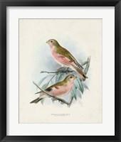 Antique Birds IV Framed Print