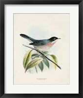 Antique Birds V Framed Print