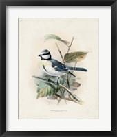 Framed Antique Birds VI