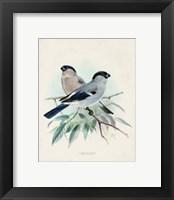 Framed Antique Birds VIII