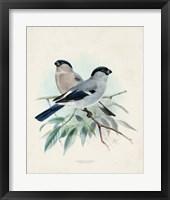 Antique Birds VIII Framed Print