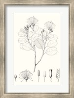 Framed Illustrative Leaves I