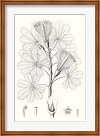 Framed Illustrative Leaves II