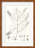 Framed Illustrative Leaves IV