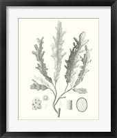 Framed Sage Green Seaweed I