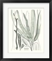 Framed Sage Green Seaweed II