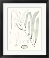 Framed Sage Green Seaweed III