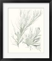 Framed Sage Green Seaweed IV