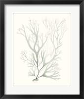 Framed Sage Green Seaweed V