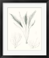 Framed Sage Green Seaweed VIII