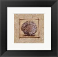 Fan Shell Framed Print