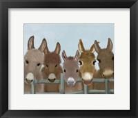 Framed Donkey Herd at Fence