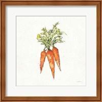 Framed Veggie Market V Carrots