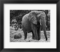 Framed Mama and Baby Elephant I