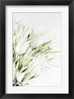 Framed Leucadendron