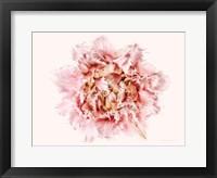 Framed Pink Fringed Tulip