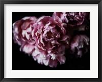 Framed Pink Double Tulips