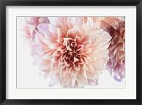 Framed Peach Dahlias Light