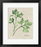 Framed Italian Parsley v2 on Burlap