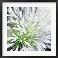 Framed Cleome Splash II Black