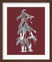 Framed Pomegranate Botanical I