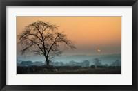 Framed Morning Sun