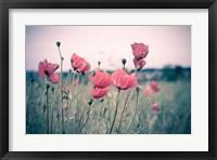 Framed Pink Tulips