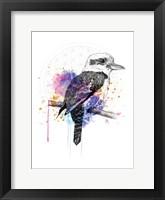 Framed Kookaburra