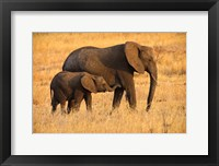 Framed Mother and Baby Elephants