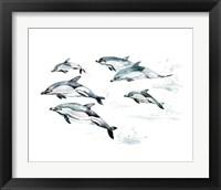 Framed Common Dolphin