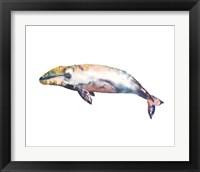 Framed Gray Whale