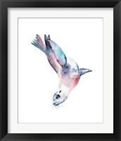 Framed California Sea Lion