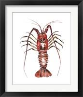 Framed Spiny Lobster