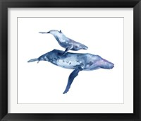 Framed Mother & Calf Humpback