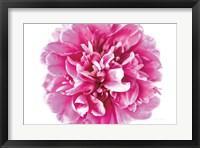 Framed Pink Peony Closeup