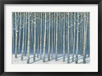 Framed Shimmering Birches