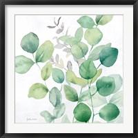 Framed Eucalyptus Leaves I
