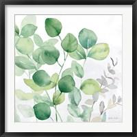 Framed Eucalyptus Leaves II