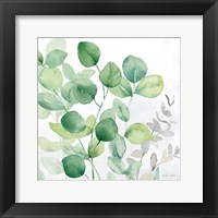 Framed Eucalyptus Leaves II