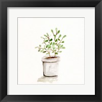 Framed Potted Botanicals I